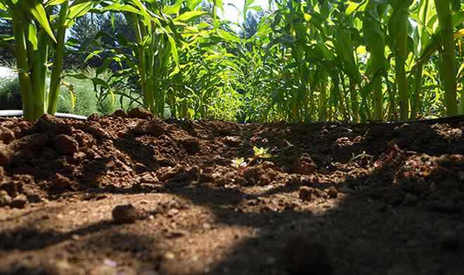 Sustainable agriculture depends on healthy soils