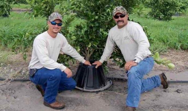 Tree T Pee Creates Huge Water Savings For Farmers – Food Tank