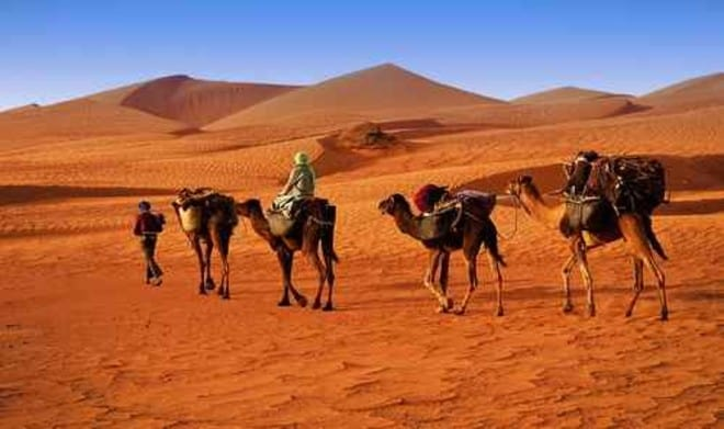 Africa Nomads Conservation – Food Tank
