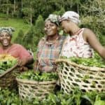 Women Farmers Making it Happen #IWD2015