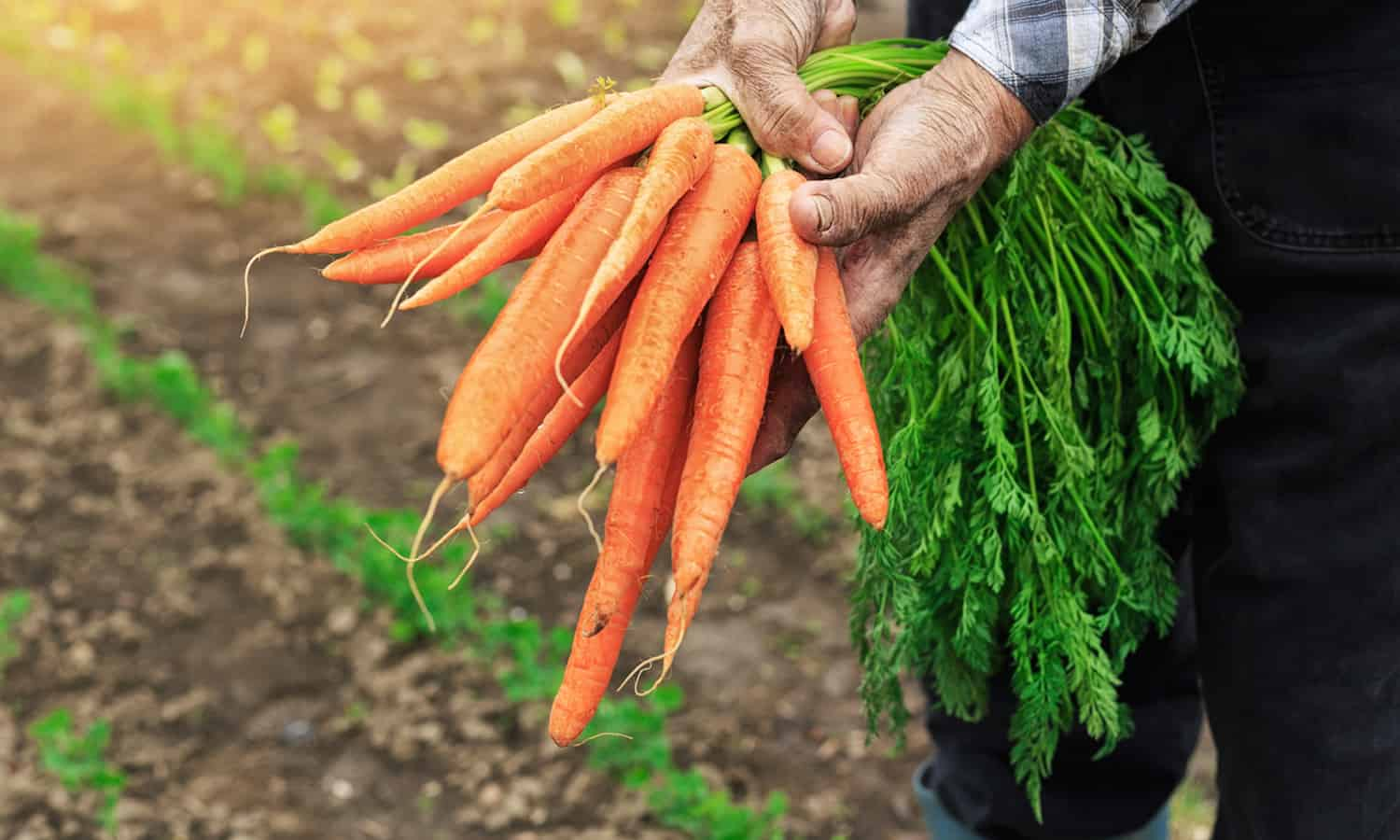 The European Parliament's Independent Research Service released an encouraging report about the health benefits of eating organic