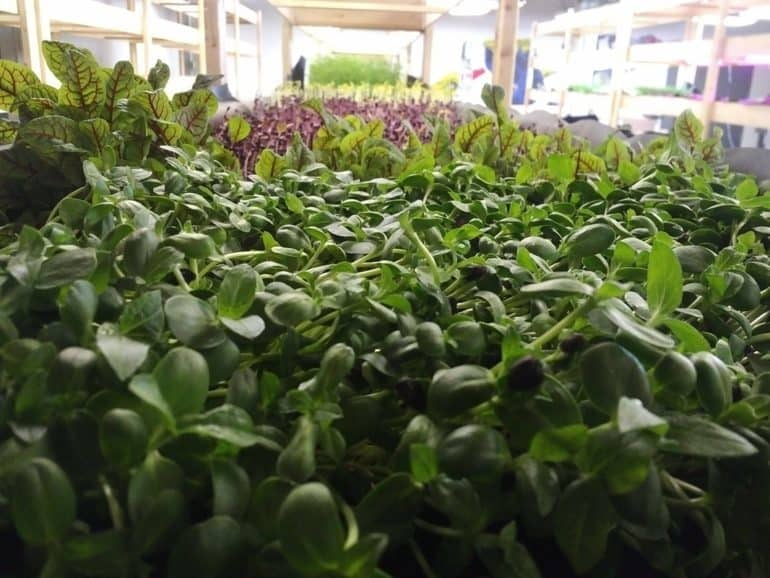 food-tank-locals-grow-smart-urban-farm