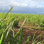 Stephanie Whalen Speaks With Food Tank About Farming In Hawaii