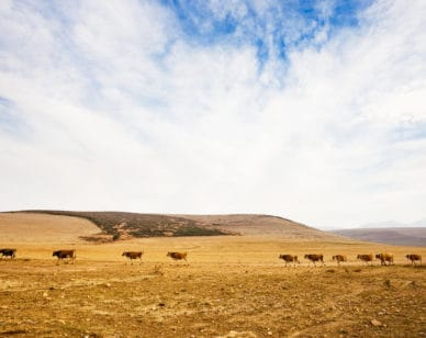 New Report: Meat and dairy industries have major impact on climate change
