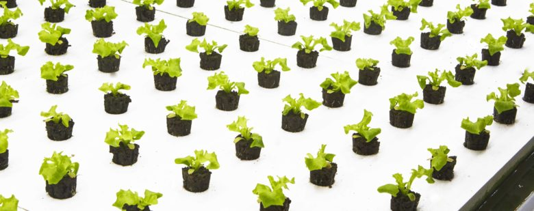 """A newly launched modern farming company, Bowery, is growing what they call the world's first """"post-organic"""" produce."""