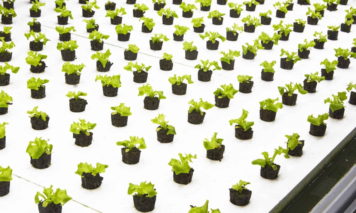 "A newly launched modern farming company, Bowery, is growing what they call the world's first ""post-organic"" produce."