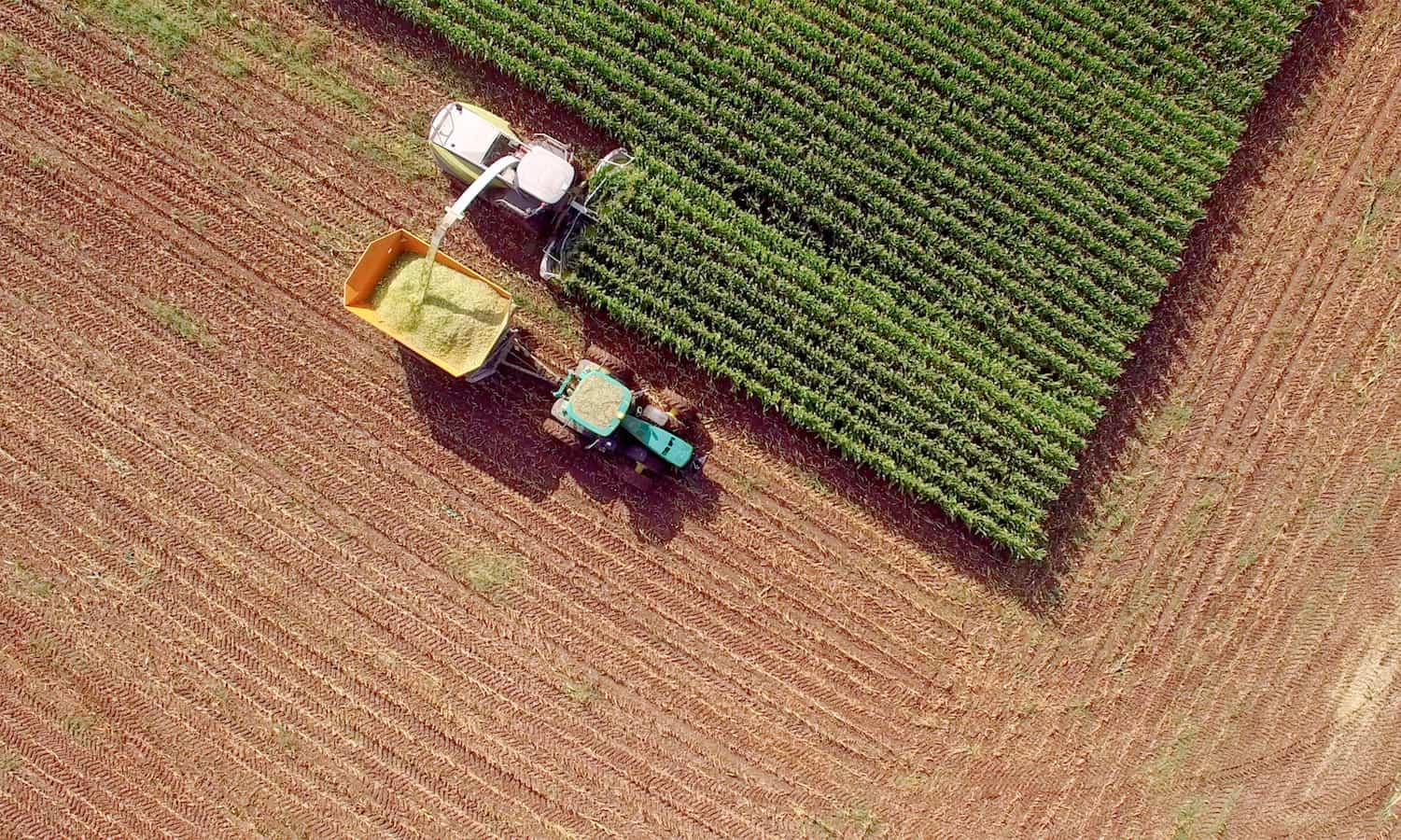 In response to a possible 20 percent import tariff, Mexican officials and business groups look for agricultural trading partners beyond the U.S.