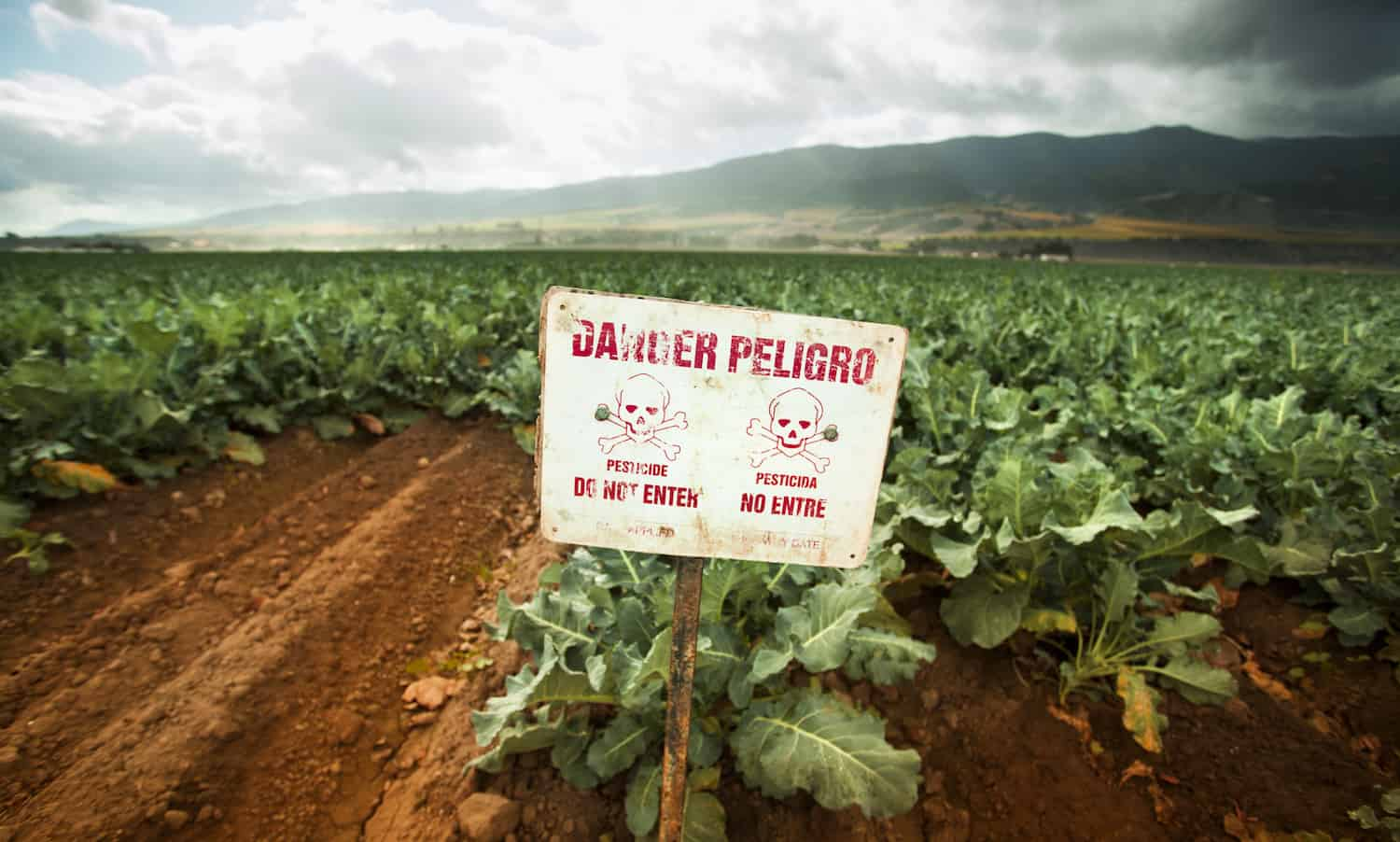 United Nations report exposes pesticides catastrophic harm to people and the environment, rejecting the myth that they are necessary in feeding the world.