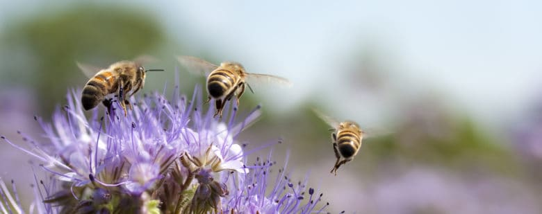 It's not just about honey; chefs and restaurants band together to advocate for bees because no bees means no food.