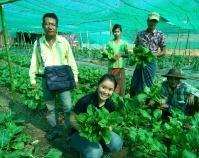 U Myo Naing's organic vegetable farm   Photo courtesy of Winrock