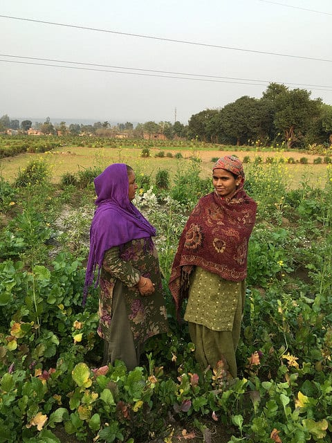 The women stand in a field of mustard, among other crops. The Indian government has sought to outlaw artisanal mustard oil mills, paving the way for imported oils.