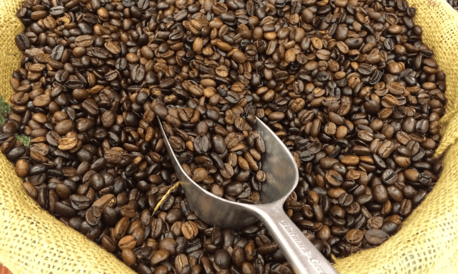 Arabica coffee, the world's most popular variety, might be extinct in Ethiopia by 2080 due to climate change.