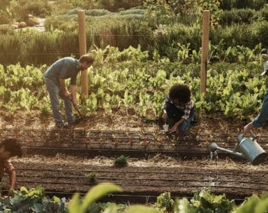 A first-of-its-kind educational partnership between the Organic Seed Alliance and the Multinational Exchange for Sustainable Agriculture is stepping up to train hundreds of new seed growers in organic production.