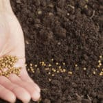 Preserving Life: Twenty Important Seed-Saving Initiatives