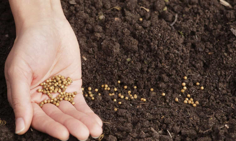 Seed-saving initiatives