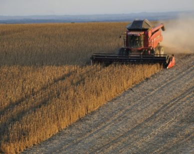 Monsanto's Dicamba-Based Herbicides are Wreaking Havoc in the Midwest