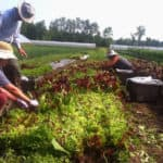 15 Gleaning Initiatives Fighting Food Waste