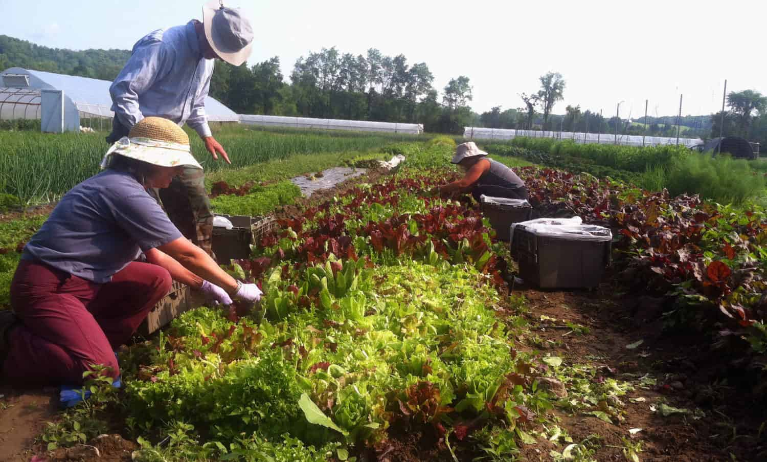 Food Tank is highlighting 15 organizations around the U.S. fighting food waste and food insecurity through gleaning.
