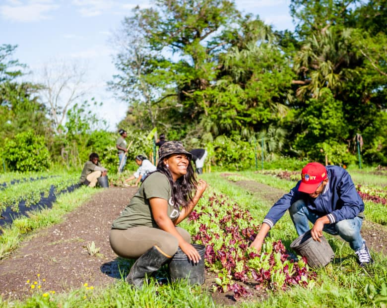 Grow Dat Youth Farm promotes youth leadership, food justice, and sustainability.