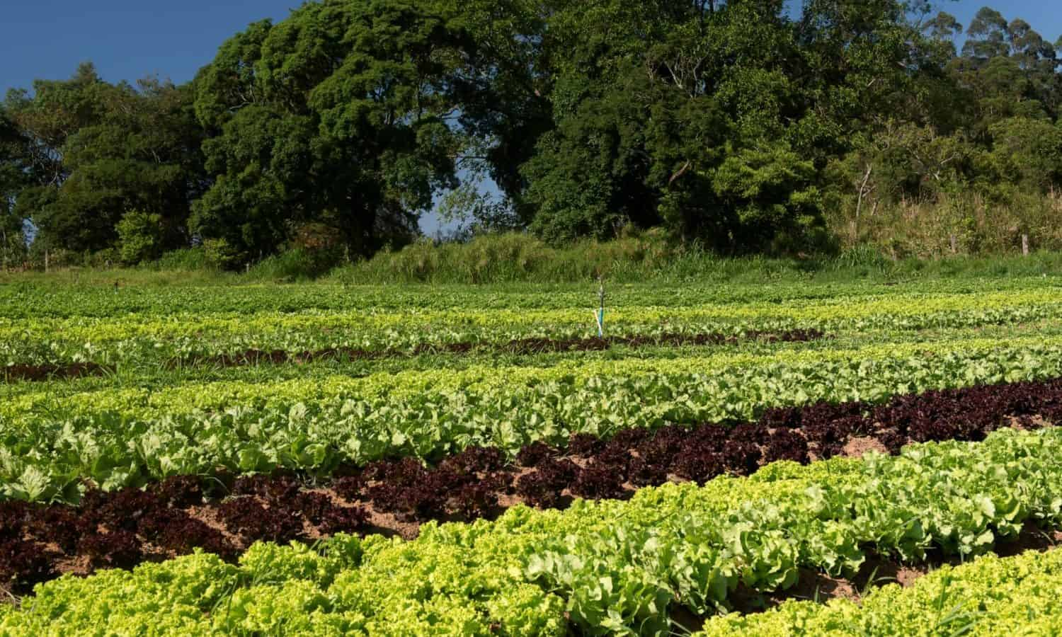 U.N. tracks rise in global hunger despite eradication efforts, but organizations are using agroecology and regenerative agriculture to combat malnutrition