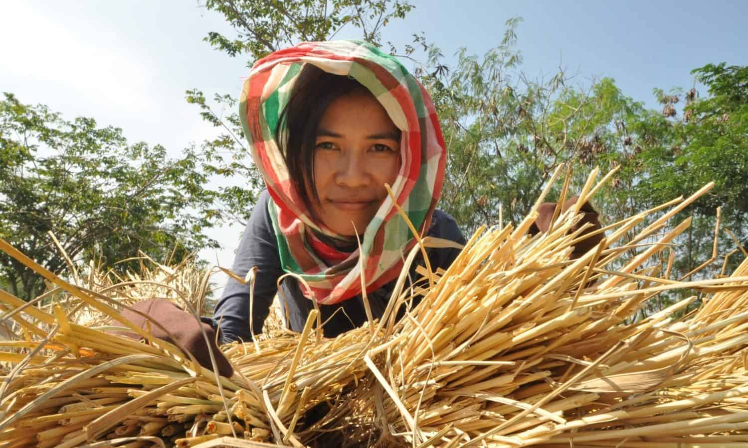 Strengthening the linkages between rural and urban areas is key to addressing hunger and poverty says the FAO 2017 State of Food and Agriculture report.