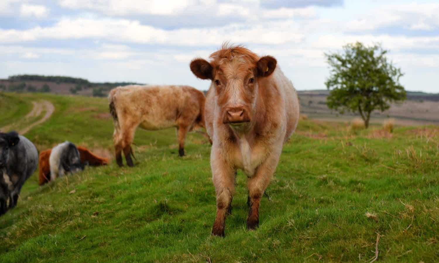 Despite new climate report, grass-fed meat offers holistic benefits.
