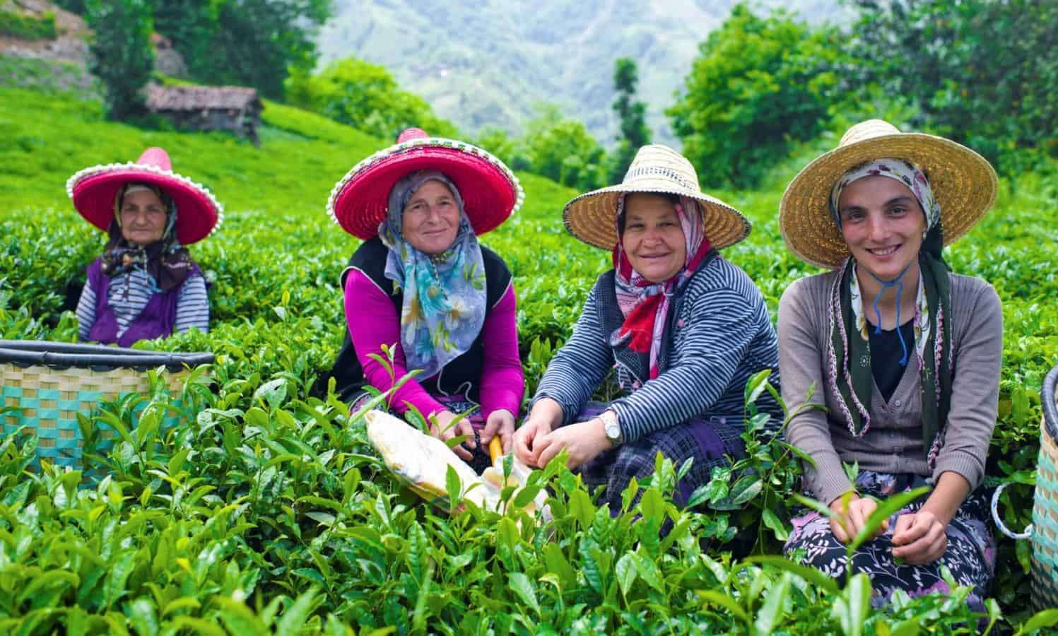 October 15 is recognized by the United Nations as the International Day of Rural Women, a day to honor rural women worldwide.