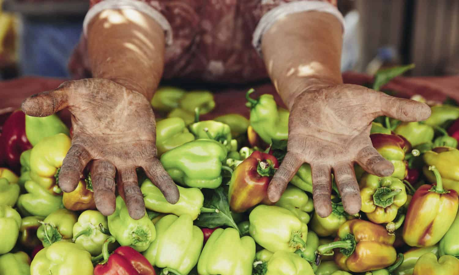 Today marks 100 days since Hurricane Maria made landfall, and Puerto Rico is still importing 95 percent of its food. It's time to prioritize the island's right to food security by way of food sovereignty.