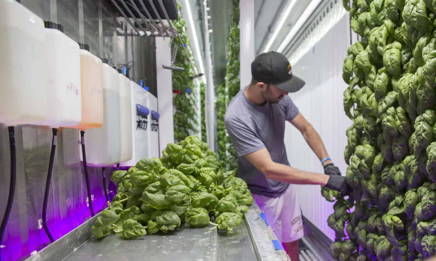 Square Roots, a high-tech indoor farming accelerator in the heart of Brooklyn, provides fresh, sustainable produce twelve months a year.