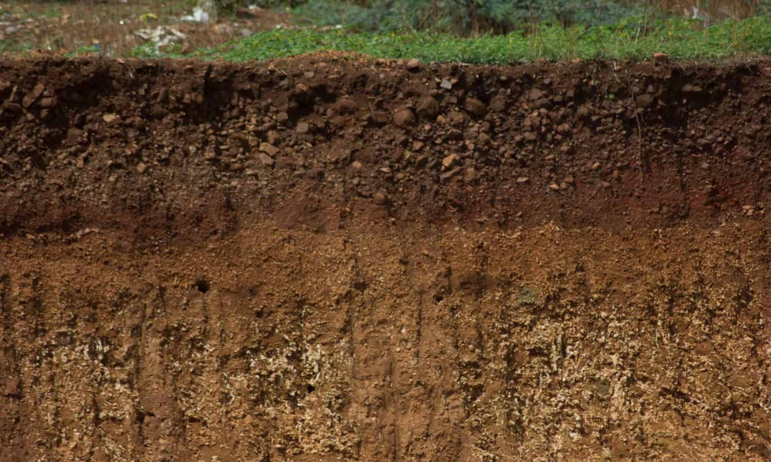 To celebrate World Soil Day, Food Tank is highlighting the work of 13 soil scientists from around the globe driving sustainable soil management.