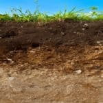 "Soil is ""Key to Sustaining Life on Earth"""
