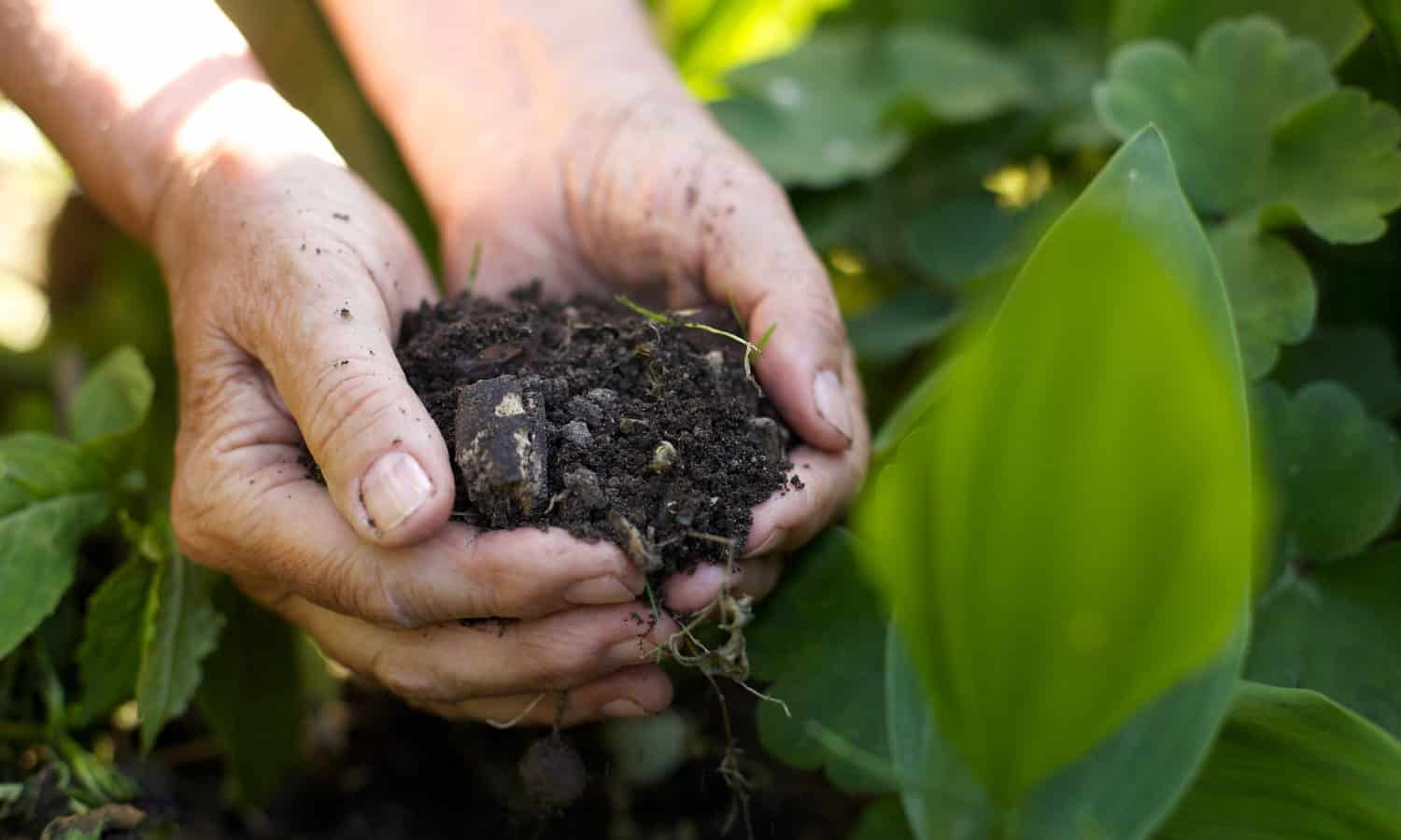 Healthy soil and regenerative farming are the solutions to climate change and human health issues.