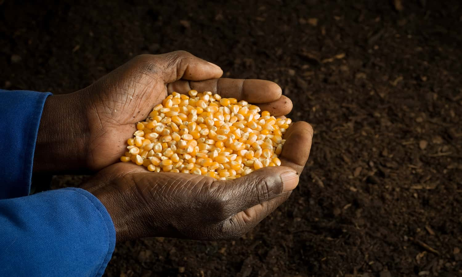 CORAF is Africa's largest sub-regional research organization conducting, coordinating, and disseminating research on sustainable agriculture practices across Central and West Africa.