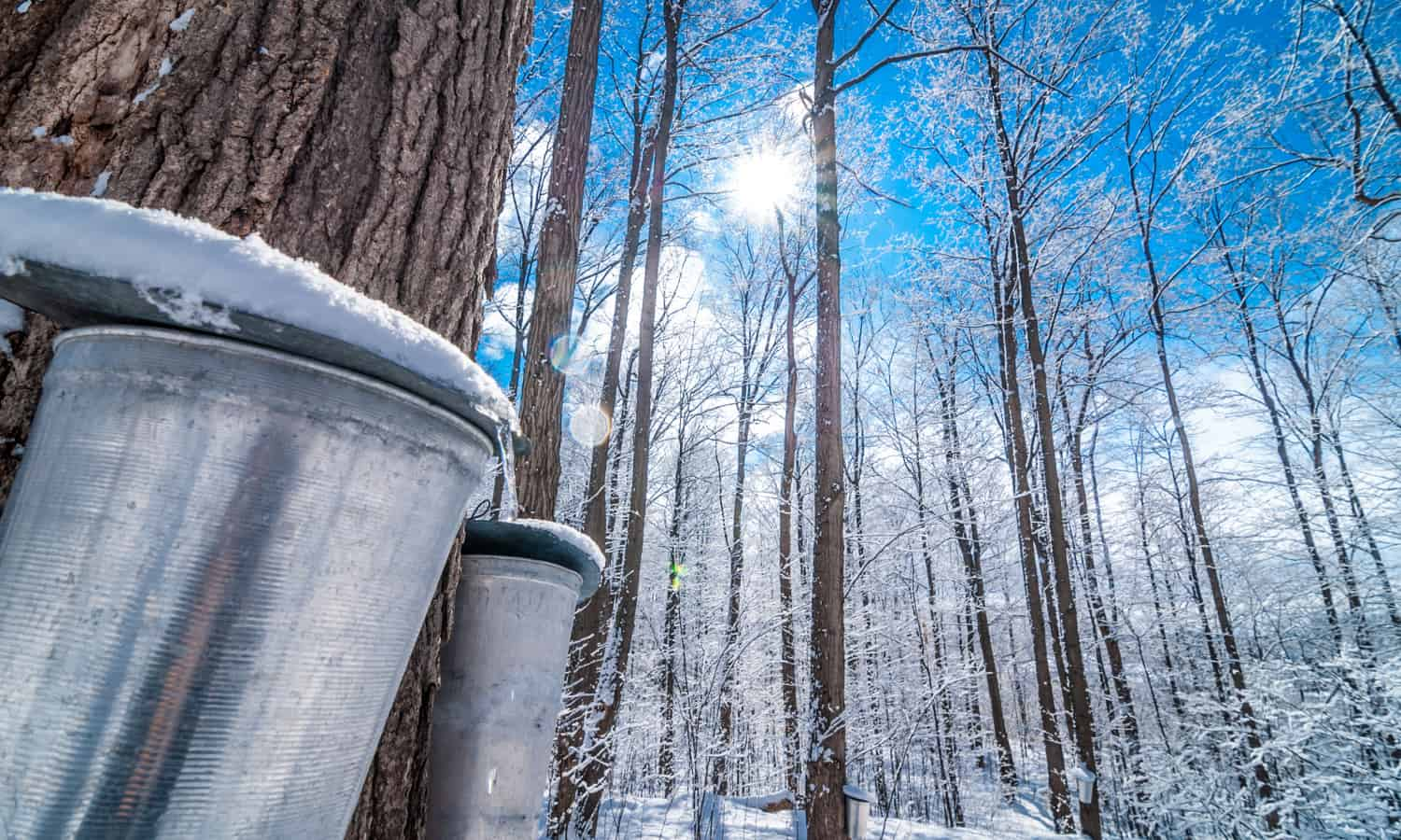 The maple sugar industry is big business in Vermont. But with warming winters, will liquid gold be sapped?