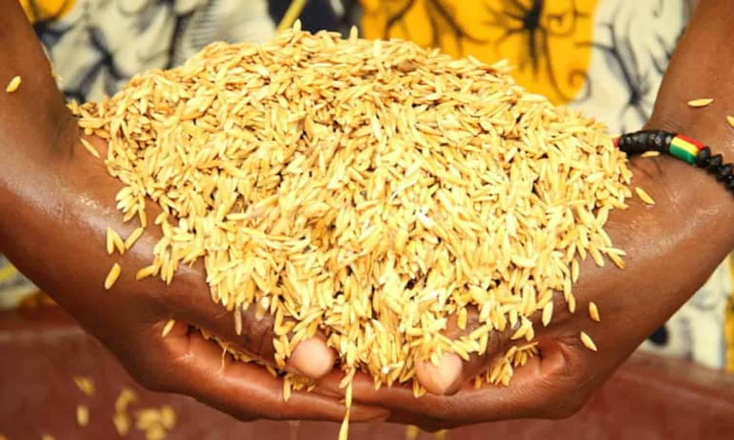 A new report reveals encouraging results for the System of Rice Intensification (SRI) in West Africa.