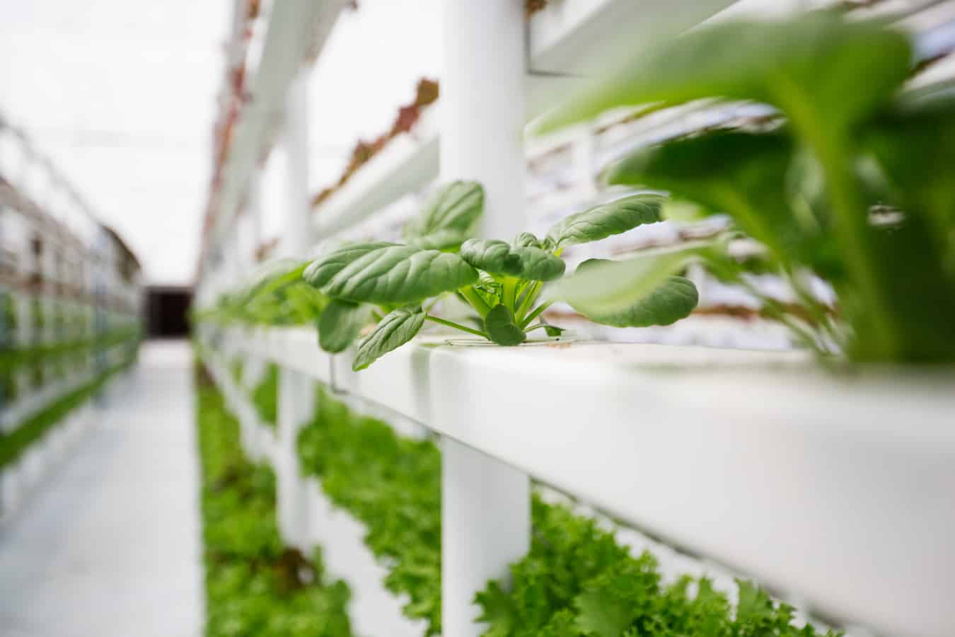 AgTech farm development company, 7 Generations, works to provide Native communities and classrooms with better food through indoor vertical farms.