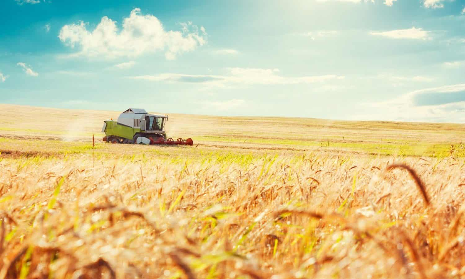 The Farm Bill is up for renewal again this year. Read about how this massive piece of legislation impacts nutrition, the agricultural economy, and the environment, and what good food advocates can do to help.