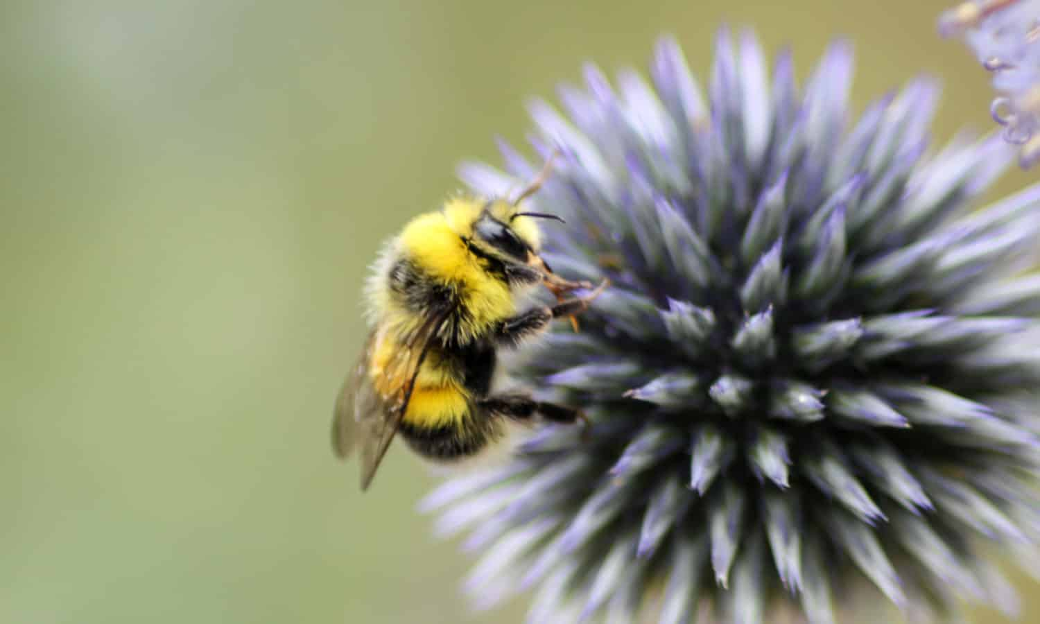 Bees play a vital role in the food system as pollinators for a variety of crops—from strawberries to almonds. In the last 20 years, bee populations have become increasingly threatened by climate change and industrial agriculture.