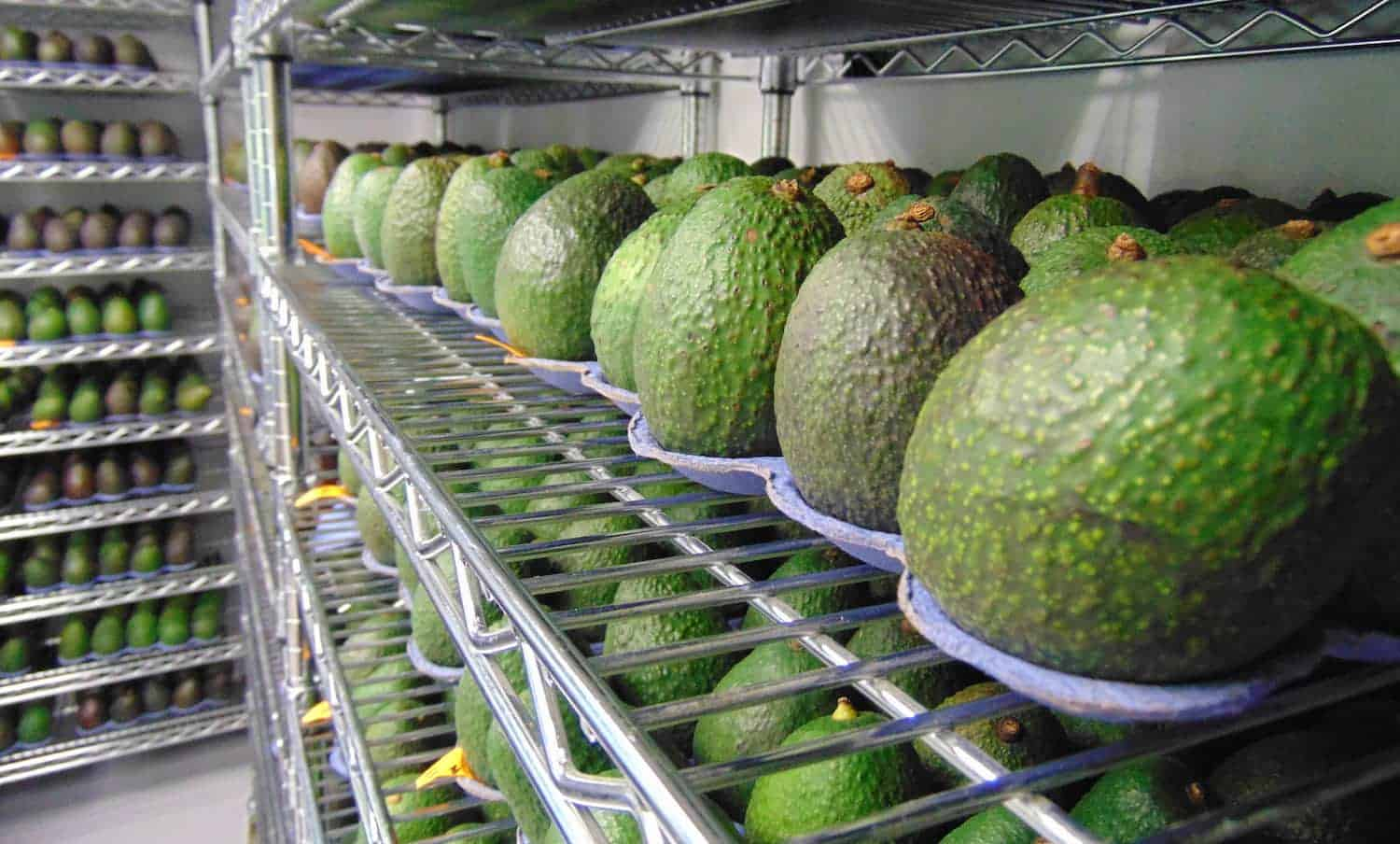 While stores and retailers waste 43 billion pounds of food each year, Costco joins with Apeel Sciences to sell longer-lasting avocados.