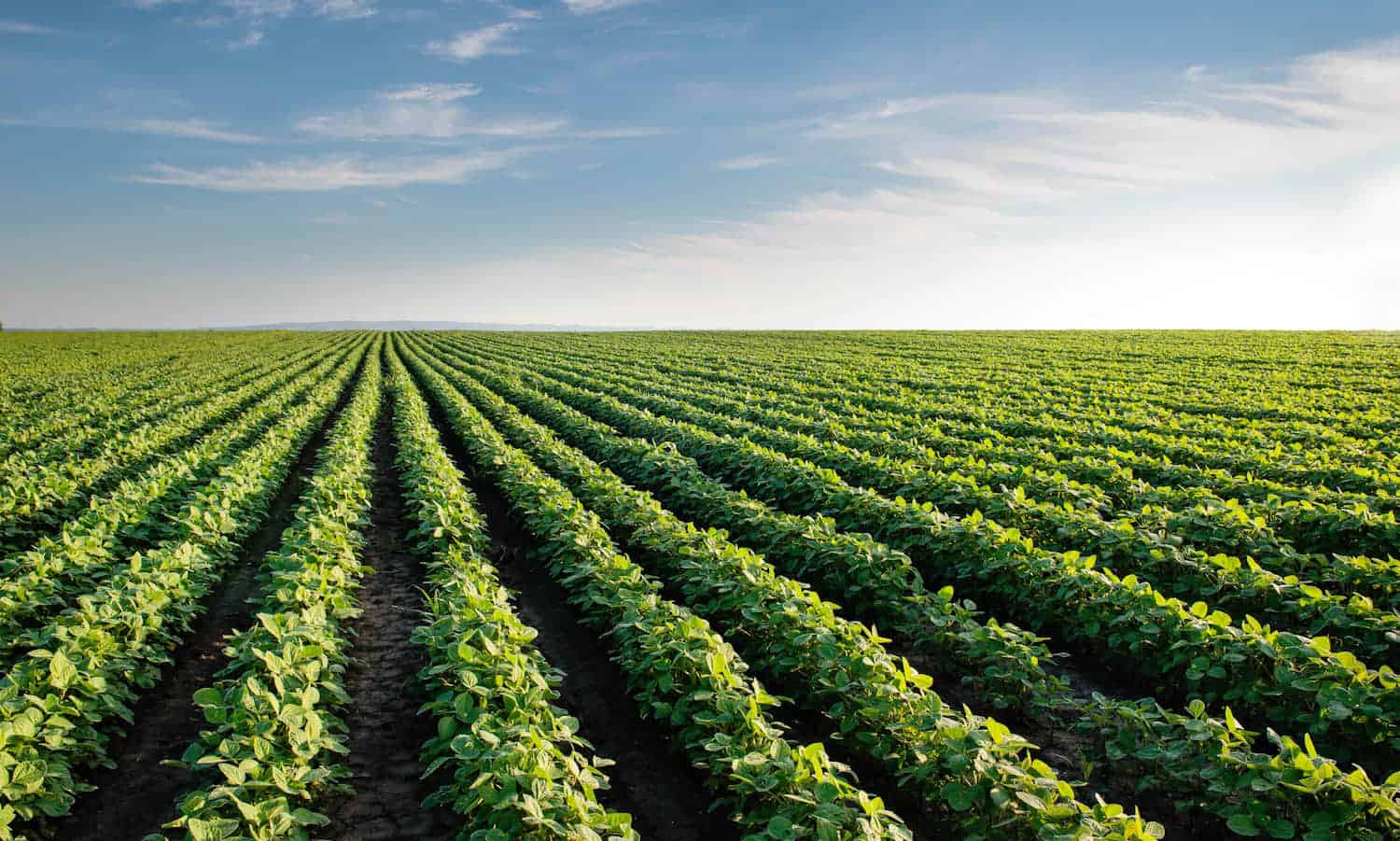 As Farm Bill draft move along quickly, some question whether the new Farm Bill will be a win or loss for organic agriculture and conservation.