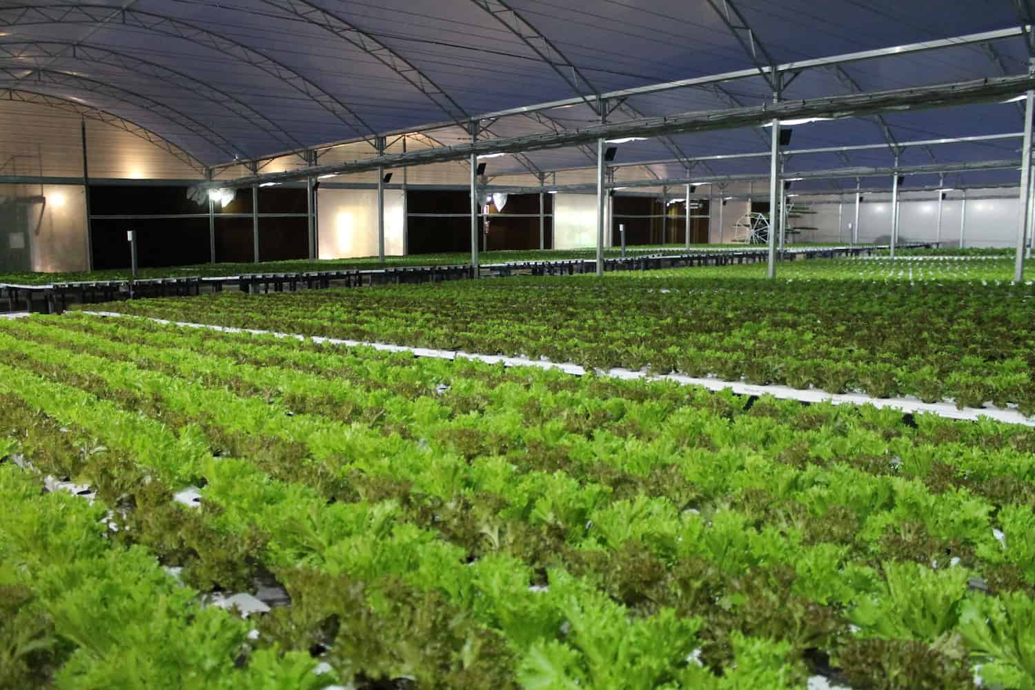Startup company BeGreen is growing fresh and organic produce inside a Brazilian shopping center