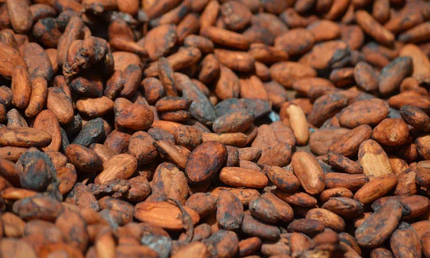 A labor of love: Ghanaian chocolate companies are molding Ghana's cocoa industry.