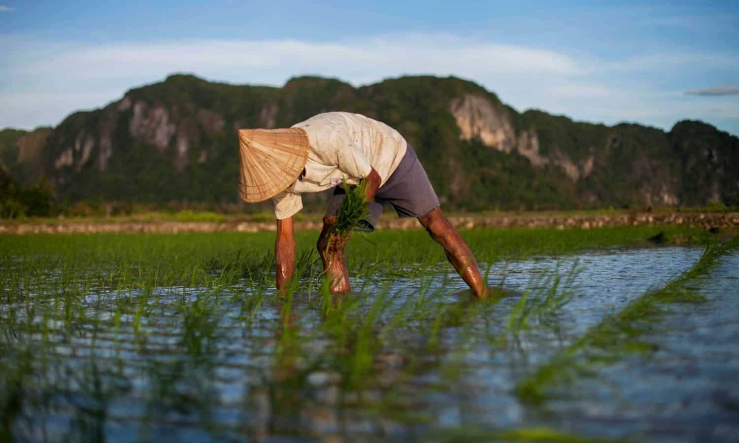 In conversation with Food Tank, Dr. Medha Devare discusses the importance of data management for implementing the CGIAR Platform for Big Data in Agriculture.