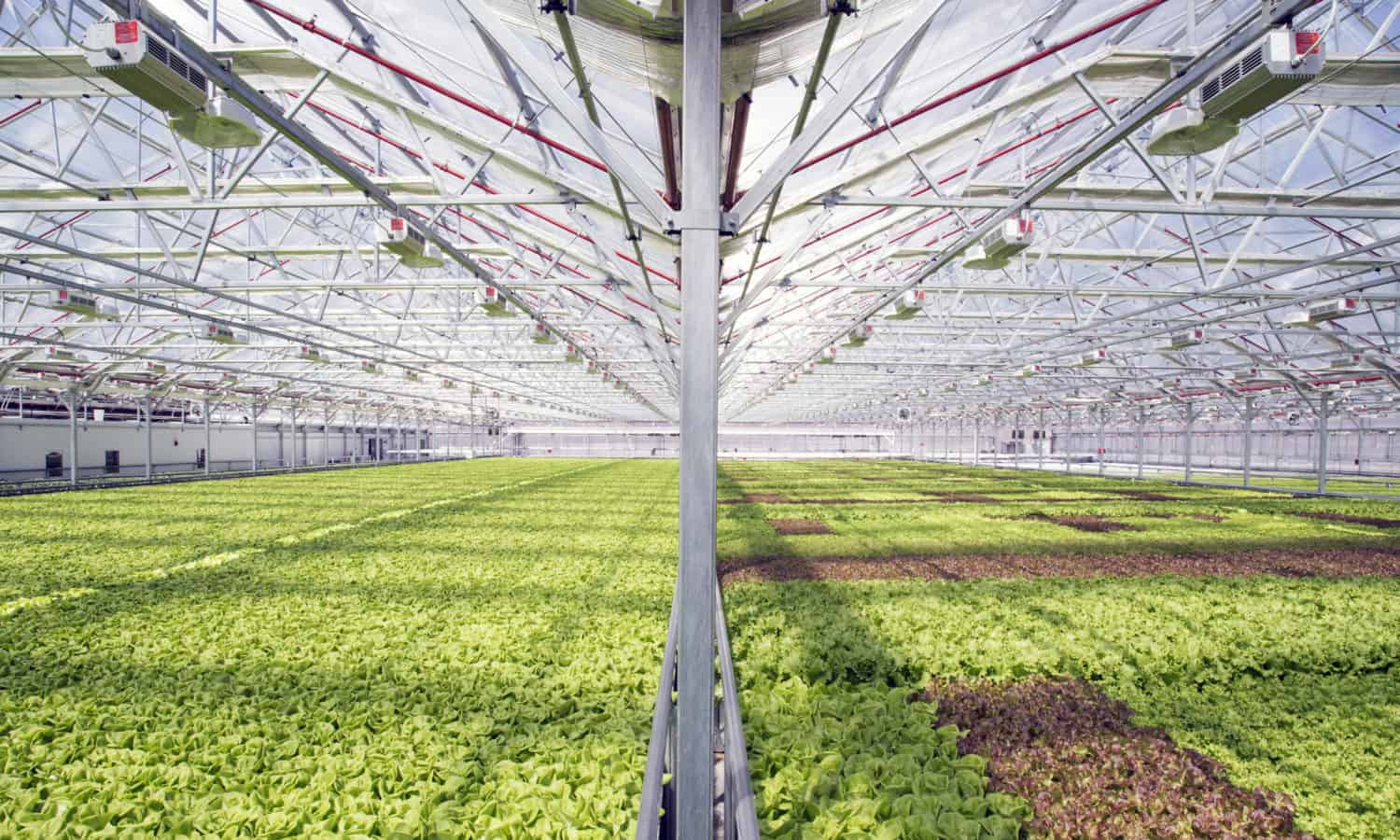 The first commercial urban greenhouse, Gotham Greens, is coming to Baltimore. The new 100,000 square feet greenhouse will bring fresh greens and new jobs to the city.