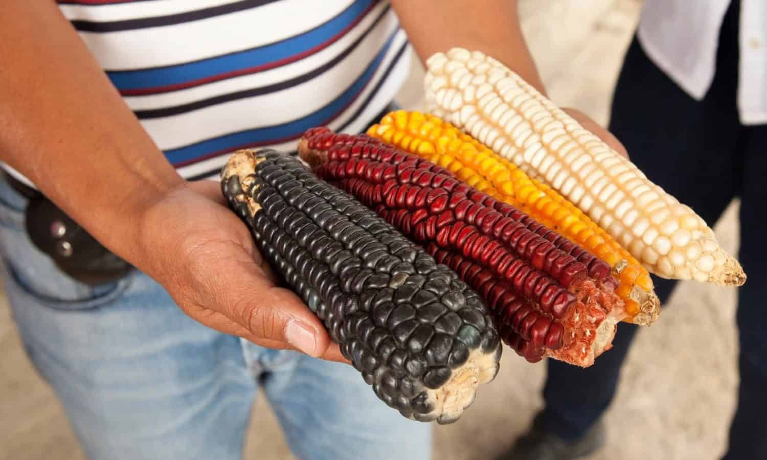 Farmers expected to mobilize in rural Mexico after López Obrador's victory with the hope to bring more sustainability to agricultural practices.