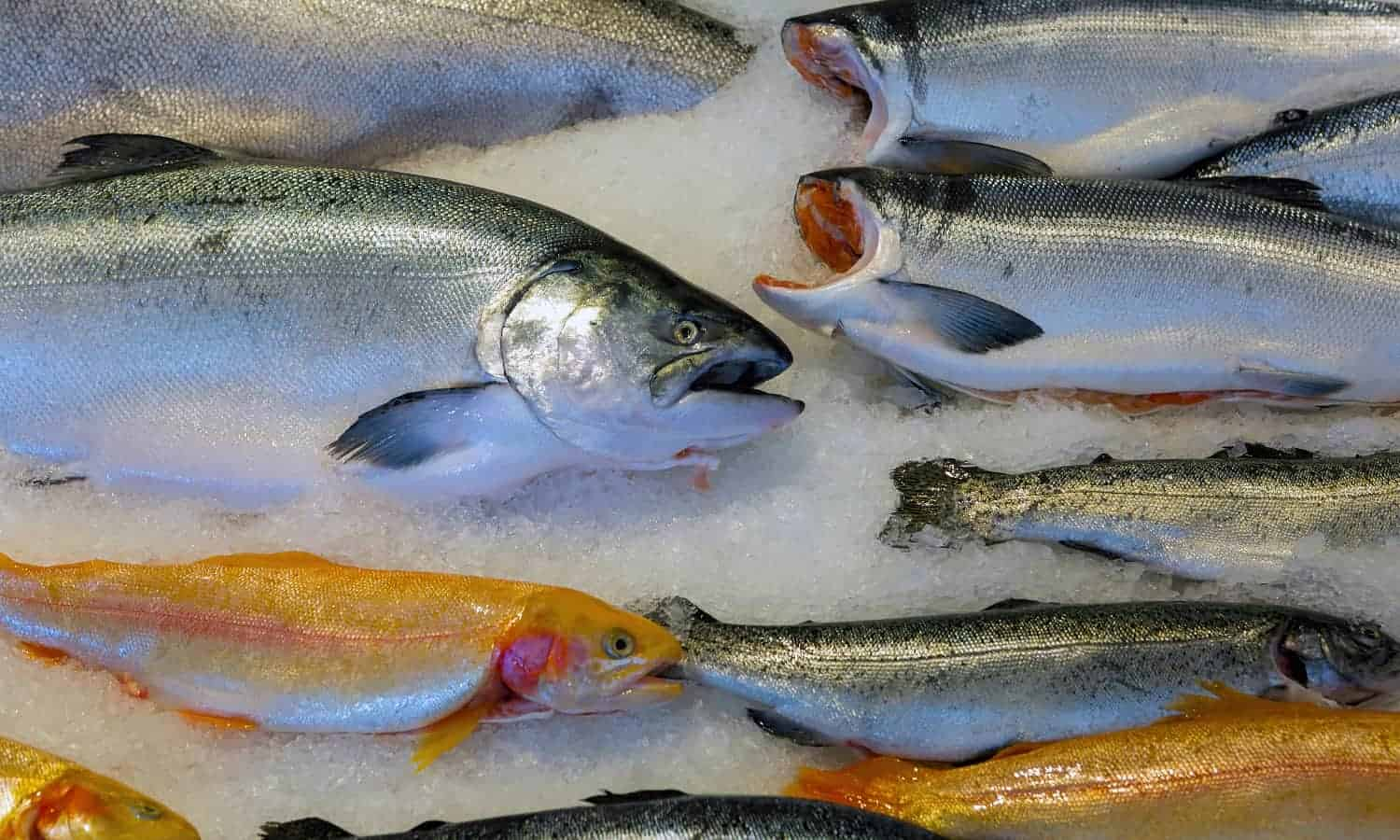 The Alaska seafood industry can meet the global demand for fish yet climate change and overfishing are threatening the Native people's food supply.