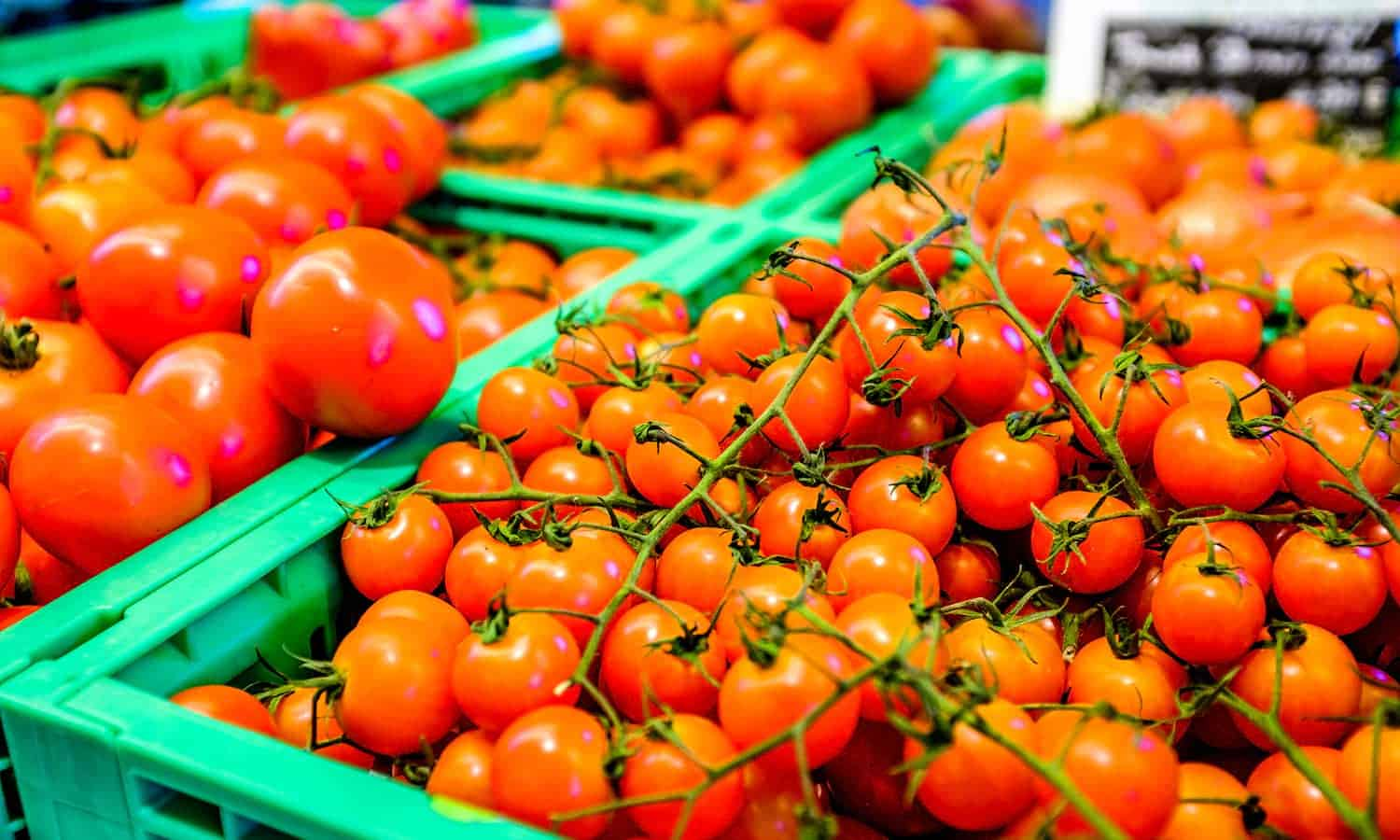 GAIN is joining with local governments and businesses to prevent post harvest loss and improve global access to nutrition—using tomatoes.