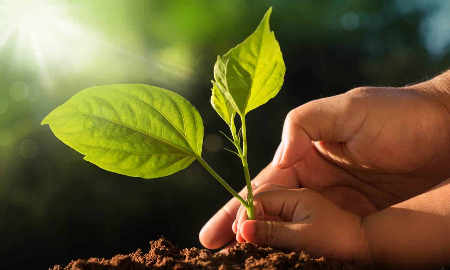 """""""Land and soils constitute the foundation for sustainable agricultural development, essential ecosystem functions, and food security,"""" according to theU.N. Food and Agriculture Organization(FAO). """"They are key to sustaining life on Earth."""""""