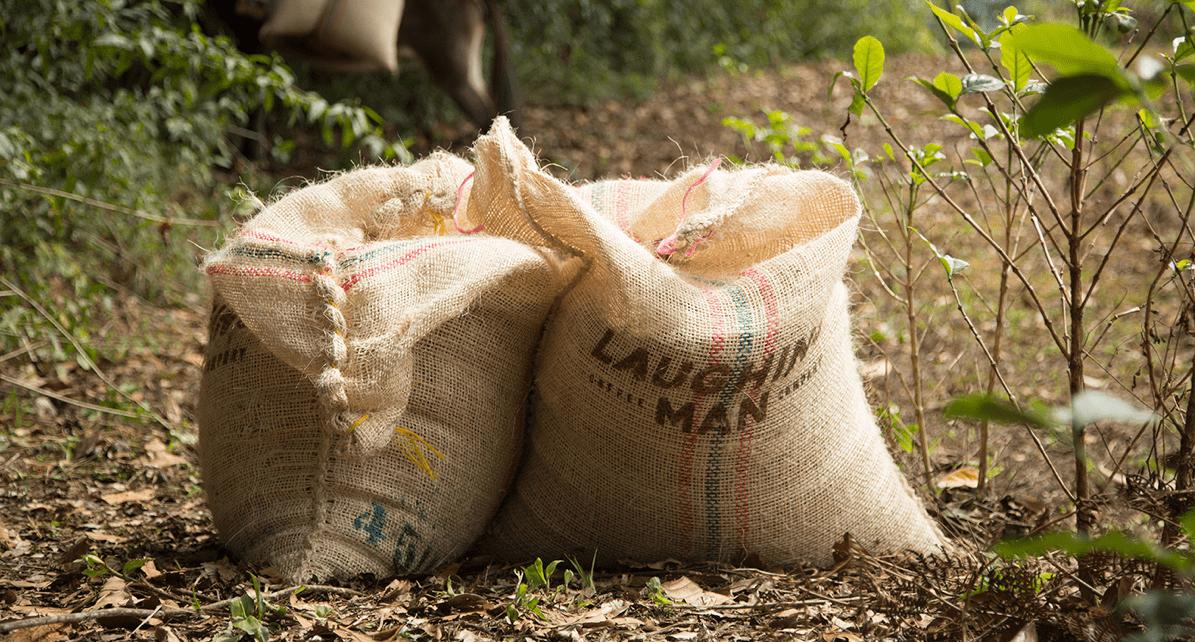 Hugh Jackman spreads happiness through sustainable, fair trade coffee