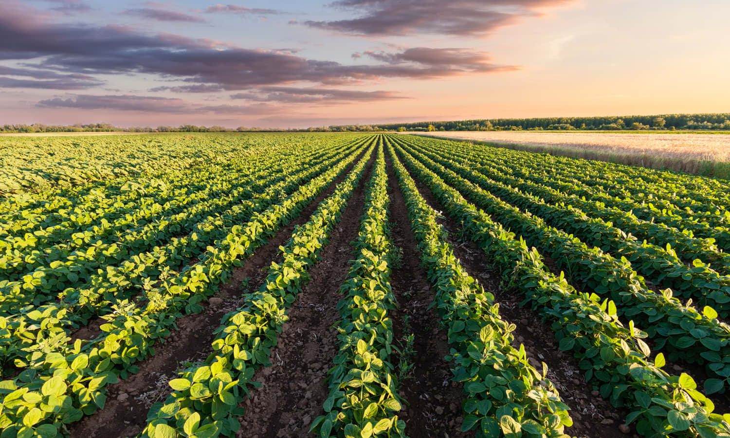 IPES-FOOD report calls for a Common Food Policy to revamp map the EU approach to sustainable food systems.